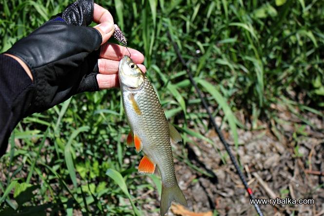 В реке рыба