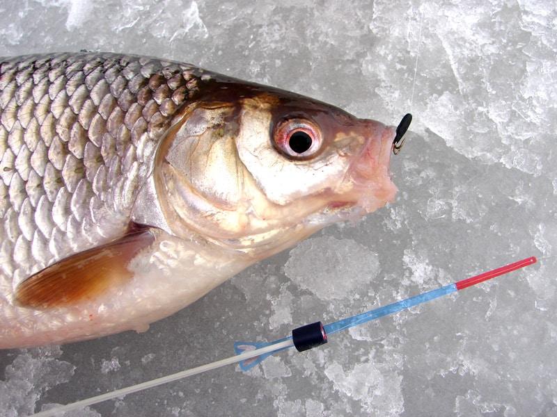 Ловля на черта зимой: как привязать мормышку, техника и советы по ловле рыбы