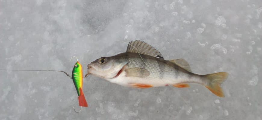 Ловля окуня зимой на балансир: выбираем уловистые, техника игры, оснастка удочки