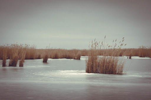 Секреты ловли карася зимой со льда: поиск на пруду и реке, сбор снасти, на что клюет