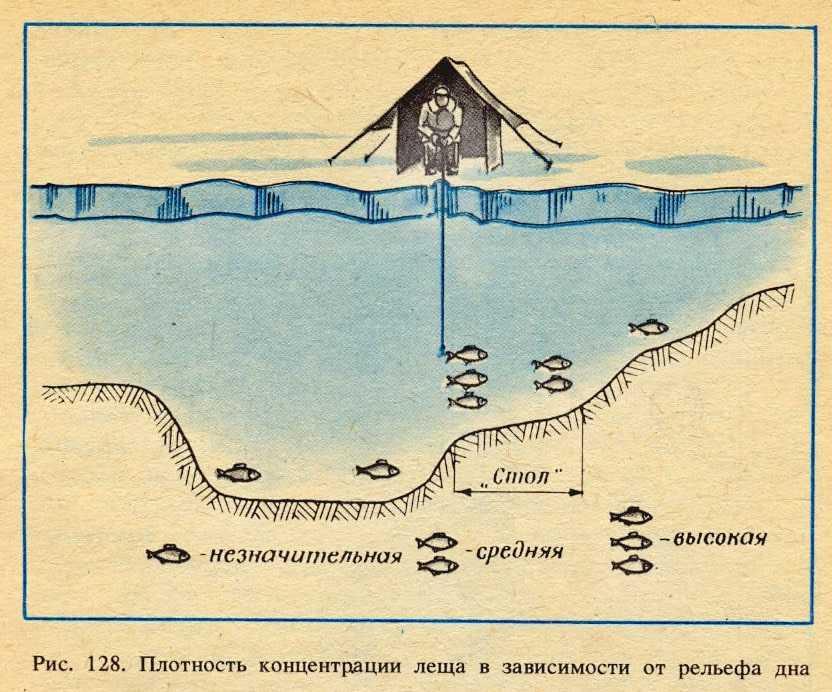 Ловля леща и подлещика зимой со льда днем и ночью: снасти, где искать, на что ловить