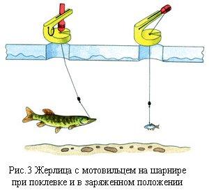 Рыбалка зимой на щуку на жерлицы: оснастка и установка, секреты ловли