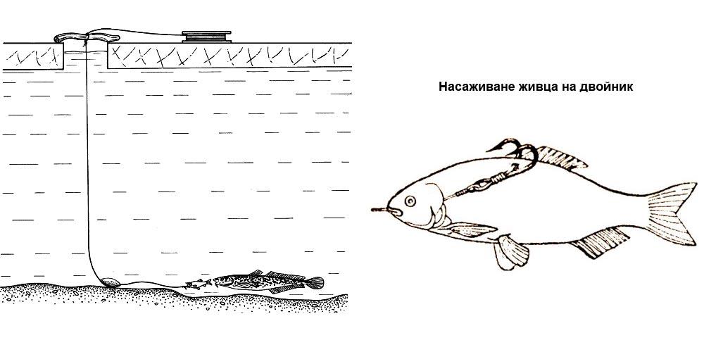 Ловля налима зимой на жерлицы: виды оснастки с фото, установка