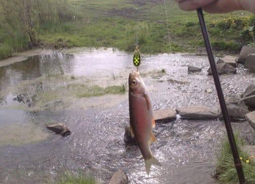 Как выглядит, где водится рыба елец и на что ловится