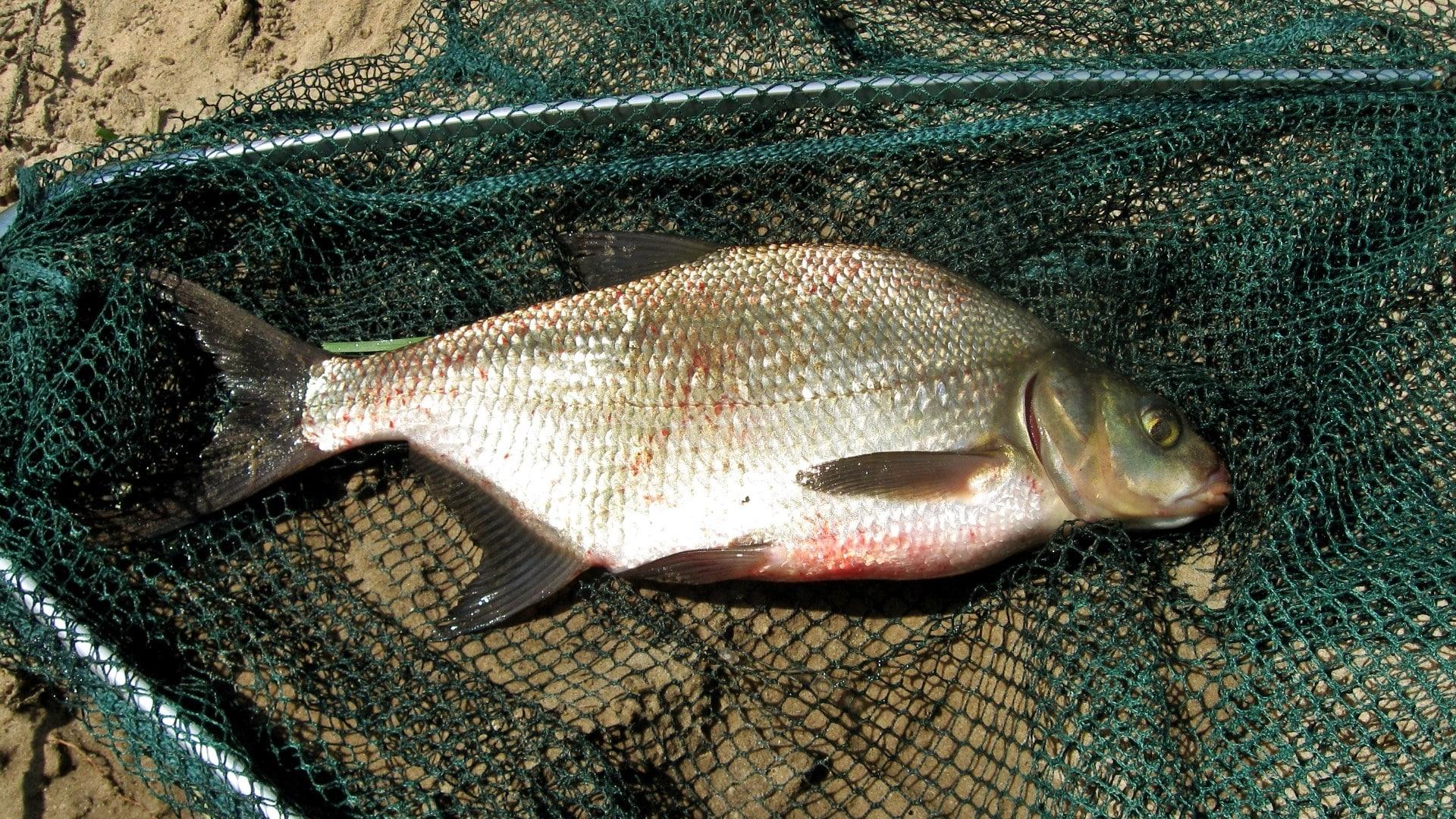 Рыбалка осенью: какая рыба клюет, когда, где и на что