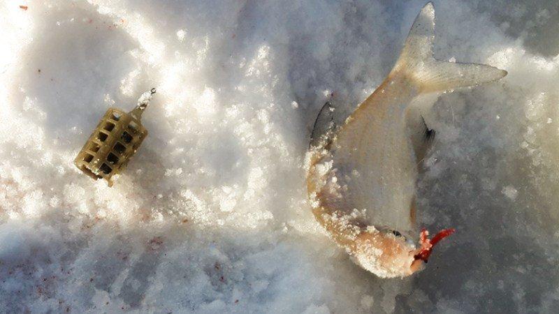 Зимний фидер со льда: секреты оснастки и техника ловли