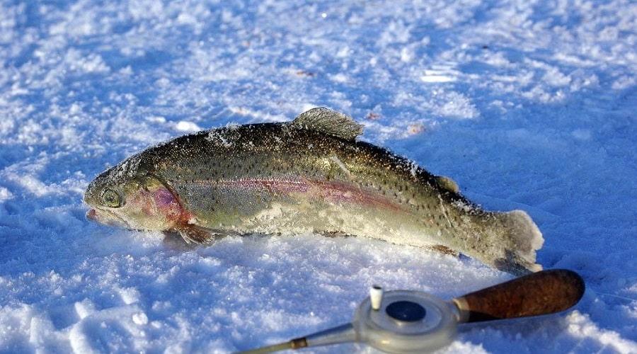 Ловля форели на ратлины зимой, лучшие вибы для ловли радужки со льда