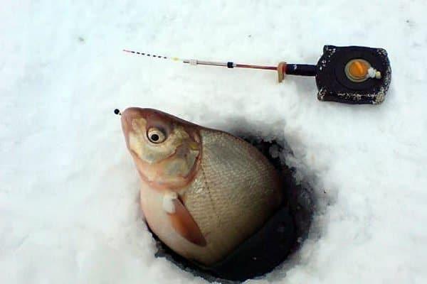 Ловля леща на поплавочную удочку зимой: оснастка, тактика рыбалки