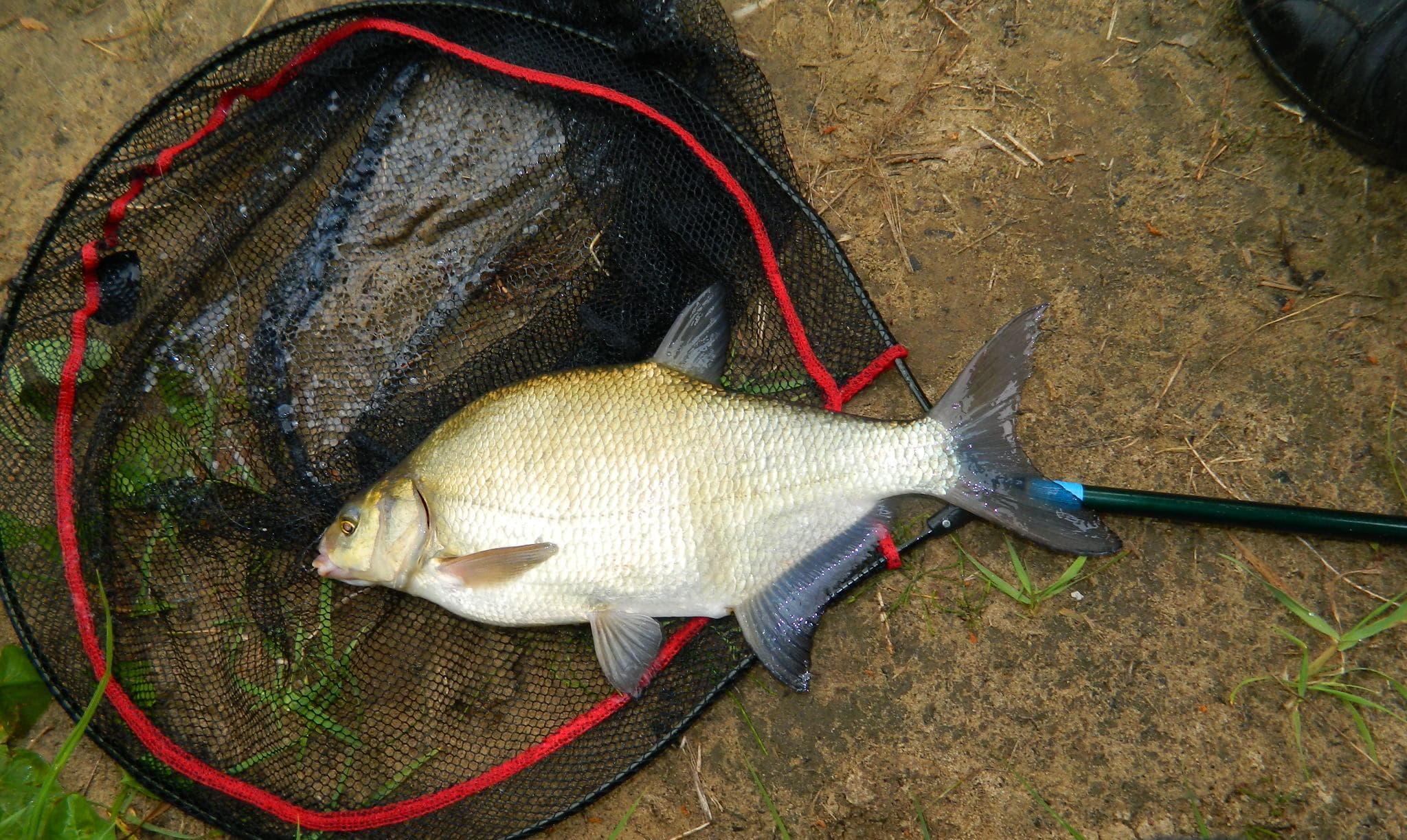 Как сделать СУПЕР РАКЕТУ для прикормки рыбы