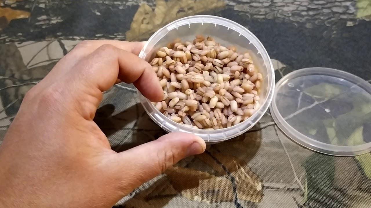 Как сварить и запарить перловку для рыбалки: рецепты прикормки и насадки