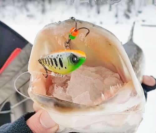 Ловля щуки зимой на ратлины - как выбрать и как ловить