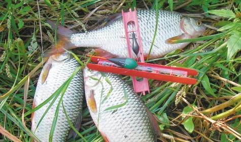 Ловля рыбы в октябре: рыбалка с берега и лодки, календарь клева