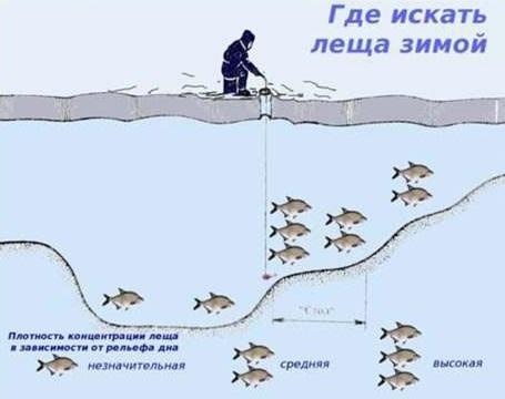 Ловля леща на комбайн зимой: оснастка и монтаж, особенности рыбалки на спускник