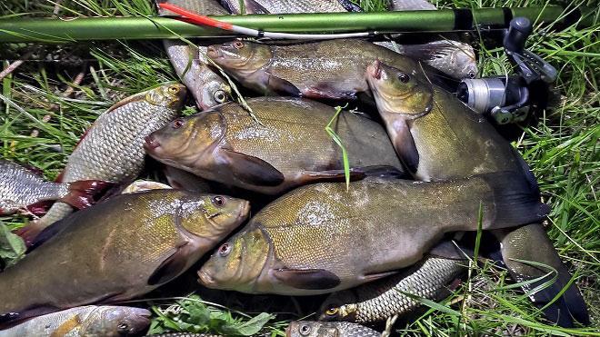 Ловля линя на поплавочную удочку - поиск, тактика, оснастка