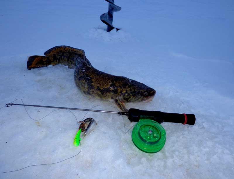Рыбалка на налима зимой - 7 уловистых снастей для ловли большеротого хищника