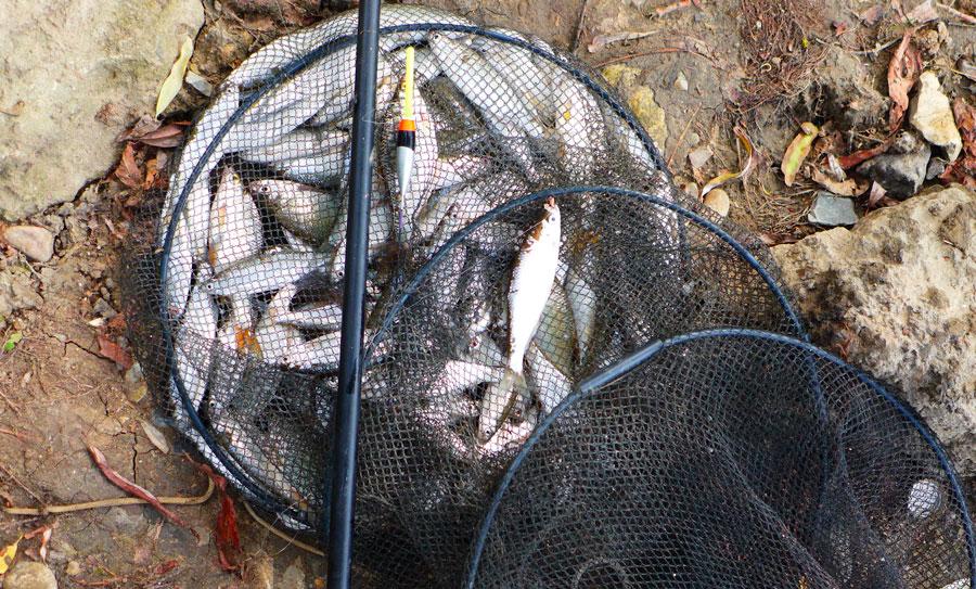 Ловля уклейки на поплавочную удочку весной, летом и осенью