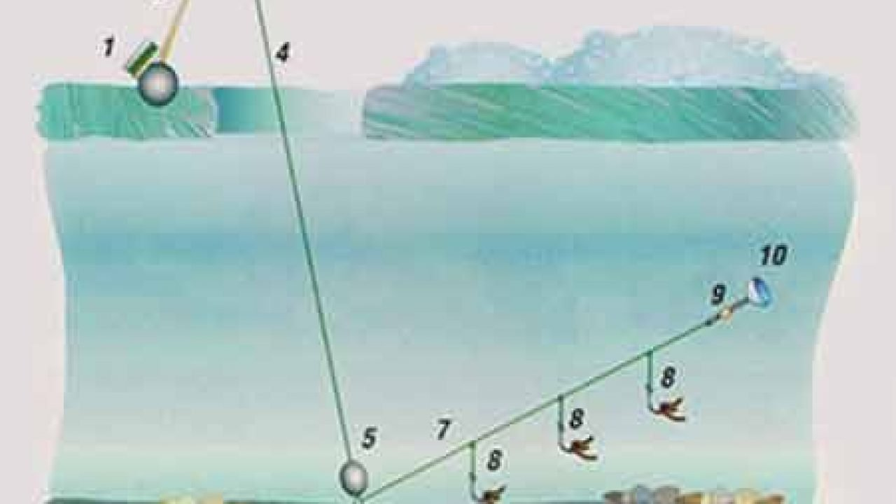 Ловля леща с лодки и берега на поплавок, донку, фидер
