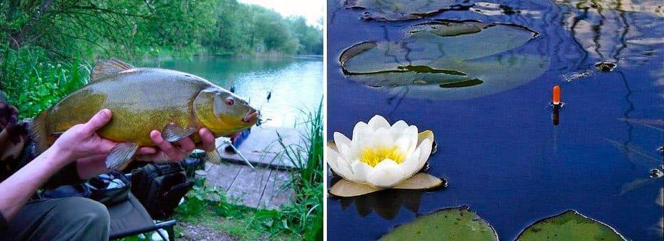 Ловля линя весной на поплавок, фидер, донку