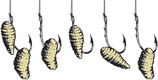 Как развести, сохранить и ароматизировать опарыша для рыбалки