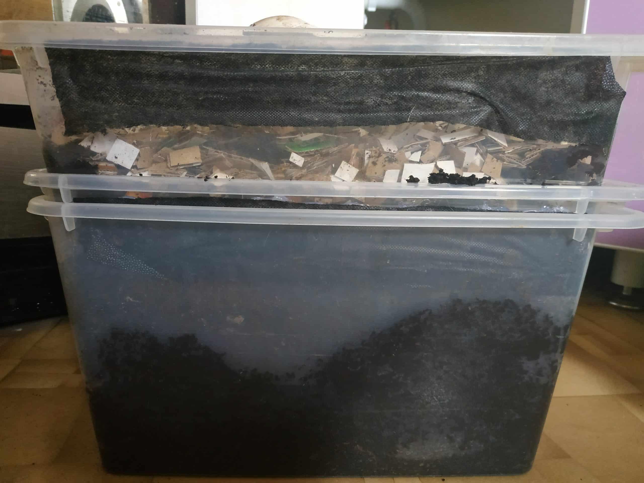 Как развести червей для рыбалки в домашних условиях