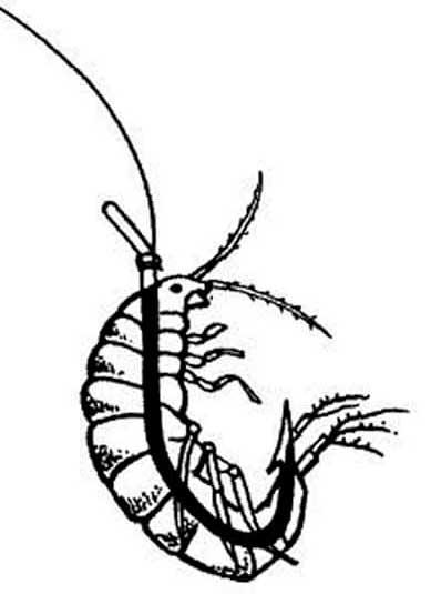 Разведение, применение и хранение мормыша на рыбалке