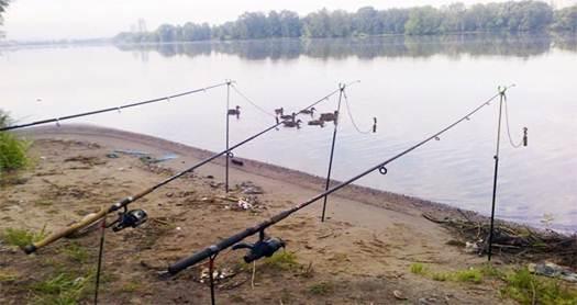Ловля линя осенью: на поплавочную удочку, фидер и донку