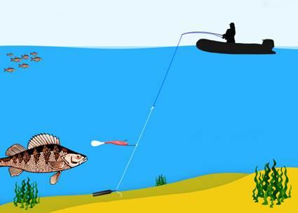 Ловля на дроп шот с берега и лодки: монтаж, тактика, приманки