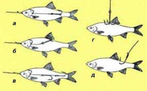 Ловля судака осенью с берега и лодки: где искать, на что ловить