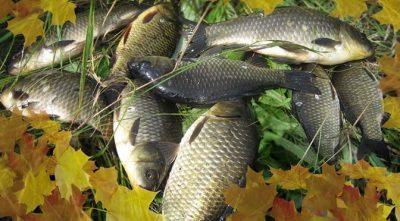 Ловля карася осенью в сентябре, октябре и ноябре