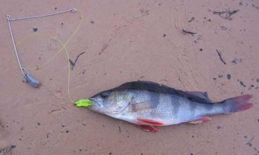 Ловля на отводной поводок осенью - особенности и секреты