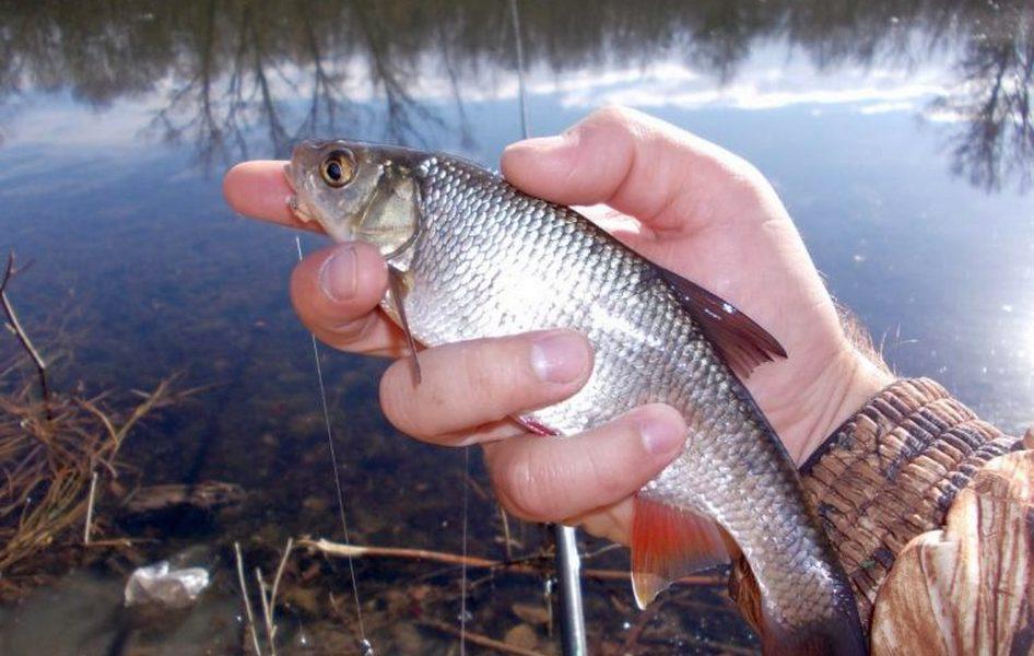 Рыбалка на донку осенью: оснастка, насадки и наживки, техника