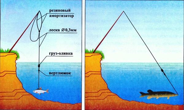 Ловля щуки на живца осенью с берега и лодки: поплавок, донка, кружки