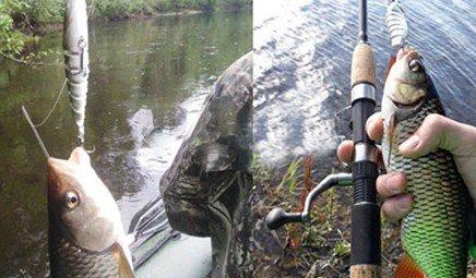 Инновационная приманка для рыбы Lucky Lure: как работает, отзывы